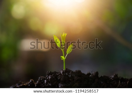 Plant,Seedlings grow in soil with sun light. Planting trees to reduce global warming. #1194258517