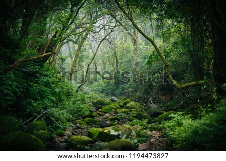 Charming green forest #1194473827