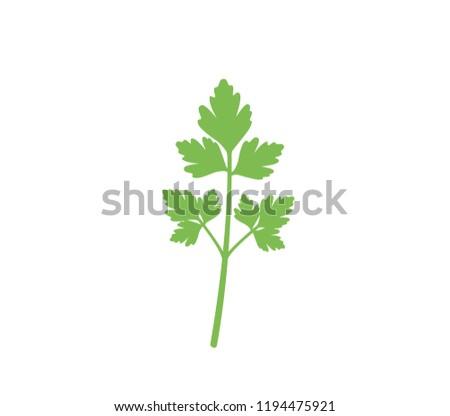 Parsley icon.  Flat parsley illustration on white background. Green parsley vector.  Fresh parsley.  Coriander icon.  #1194475921