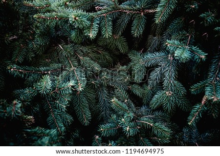 Christmas fir tree branches Background. Christmas pine tree wallpaper. Copy space.
