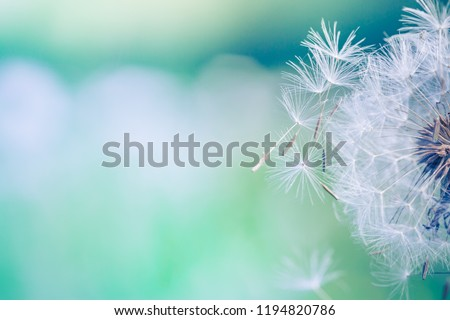 Closeup of dandelion on natural background. Bright, delicate nature details. Inspirational nature concept, soft blue and green blurred bokeh backgorund Royalty-Free Stock Photo #1194820786