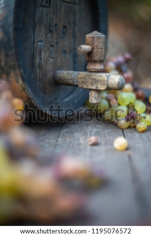 Wine barrel with white grapes on harvest season in Hungary #1195076572