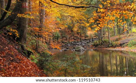 cold and clean stream runs through beech and fir forest in autumn colors