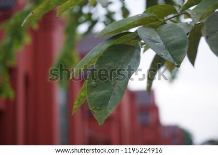 tree Leaves Grow #1195224916