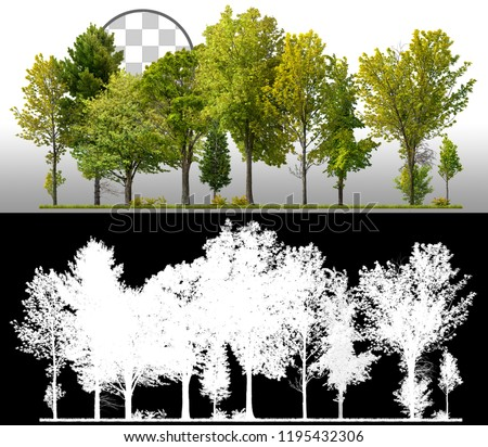 Row of green trees and pines isolated on transparent background via an alpha channel of great precision. Very high quality mask without unwanted edge. High resolution for professional composition. #1195432306