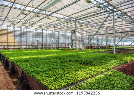 Organic ornamental plants and flowers in modern hydroponic greenhouse or hothouse or glasshouse with climate control system #1195842256