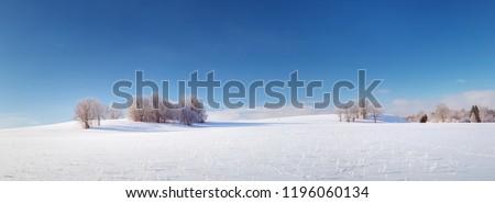 Beautiful trees in winter landscape in early morning in snowfall #1196060134
