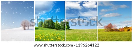 Beautiful trees in four seasons landscape on the field. Spring, summer, autumn and winter collage #1196264122