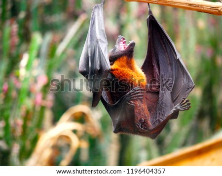 bat wild nature #1196404357