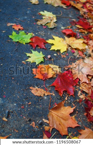 autumn leaves on ground #1196508067