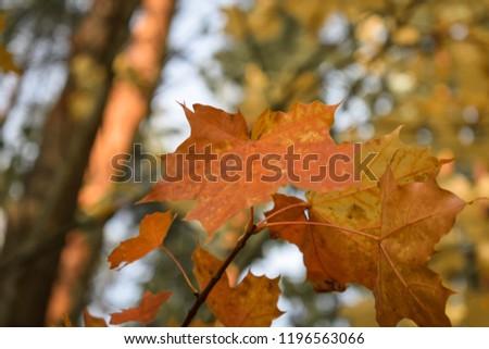 Colorful autumn landscape #1196563066