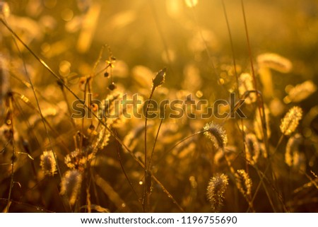 grass background light sunlight sunrise morning  #1196755690