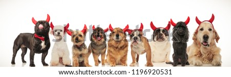 collage image of many cute dogs wearing devil horns for halloween , studio picture