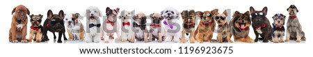 many stylish dogs of different breeds wearing bowties and sunglasses standing, sitting and lying on white background #1196923675