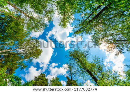 The sky with the tops of trees. View up from ground level. Beautiful nature. Mixed forest. Blue sky with sun and clouds. Russia, Europe. #1197082774