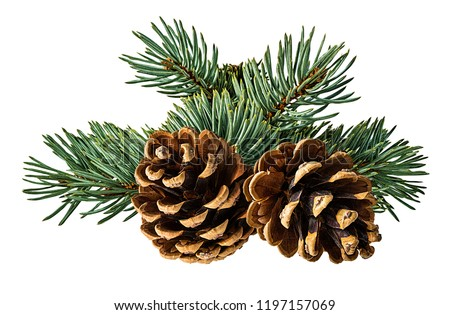 Brown pine cone on white background with clipping pass #1197157069