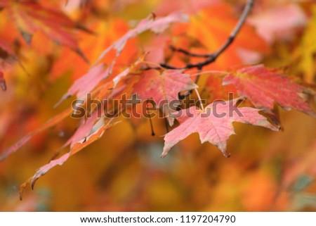 Autumn leaves on a tree #1197204790