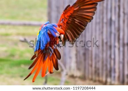 Macaw in flight #1197208444