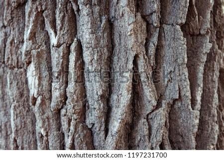 Tree Bark Texture  #1197231700