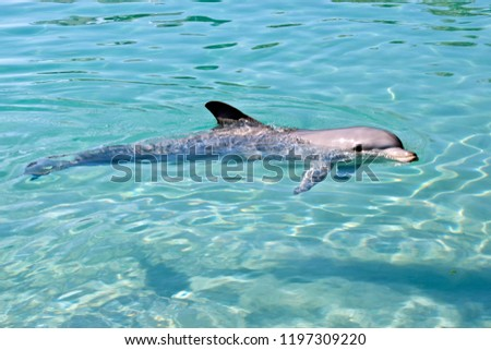 this is a side view of a bottlenose dolphin #1197309220
