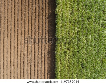Aerial view ; Rows of soil before planting.Sugar cane farm pattern in a plowed field prepared for  background #1197359014