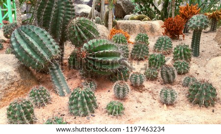 Cactus, Cactus thorns, Close up thorns of cactus, Cactus Background #1197463234