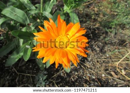 flower in the garden #1197471211