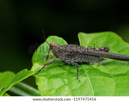 Macro Photography of Grasshopper on Green Leaf #1197475456