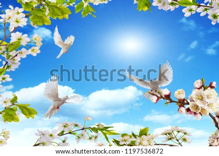 sunny sky and rejoicing birds in spring