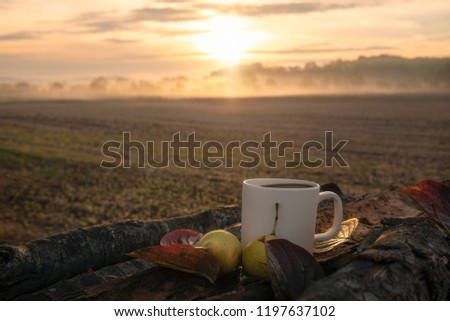 Traveler breakfast in nature with a cup of coffee and pears, on a  tree bark on a pile of wooden logs, while the sun rises through fog, in Germany.