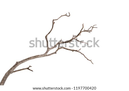 Dead tree isolated on white background, Dead branches of a tree.Dry tree branch.Part of single old and dead tree on white background. #1197700420