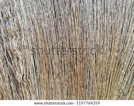 Dry grasses texture of broom #1197764359
