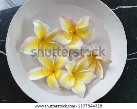 Plumeria (frangipani) flowers floating in bowl #1197844318