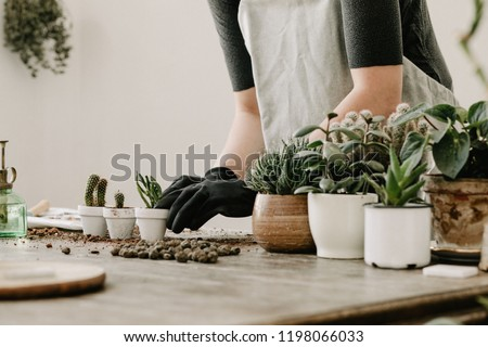 Gardeners hand planting cacti and succulents in white pots on the wooden table. Concept of home gardener.  #1198066033