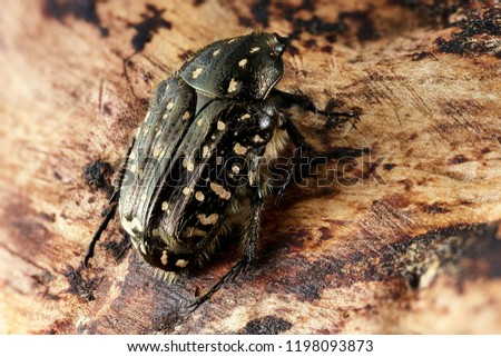 Spotted beetle sitting on a piece of wood #1198093873
