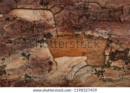 Beautiful brown pine wood hides under cracked bark Natural background for design #1198327459