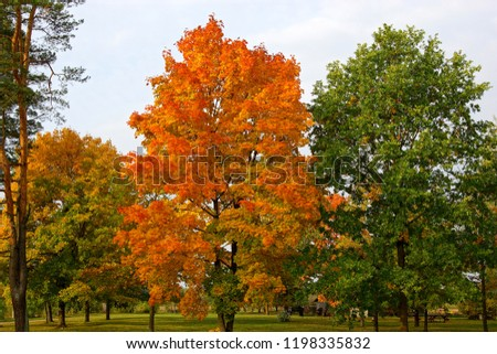 Autumn orange and red trees in the forest #1198335832