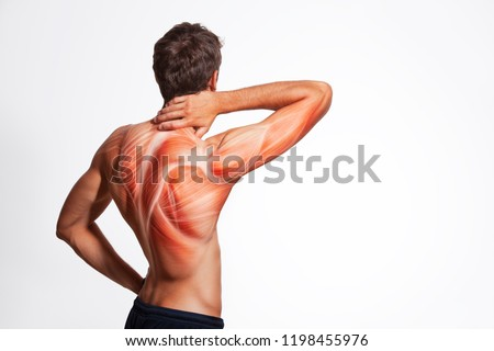 Man's back muscle and body structure. Human body view from behind isolated on white background. #1198455976