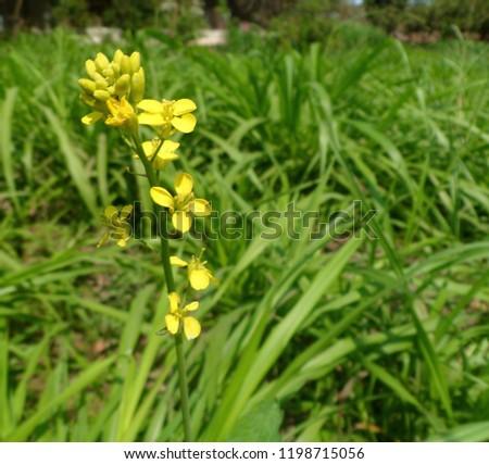 yellow flower in field #1198715056