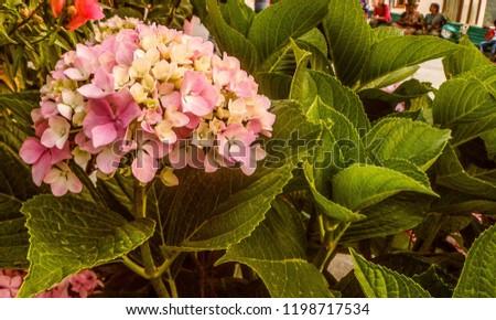pink beautiful flower #1198717534