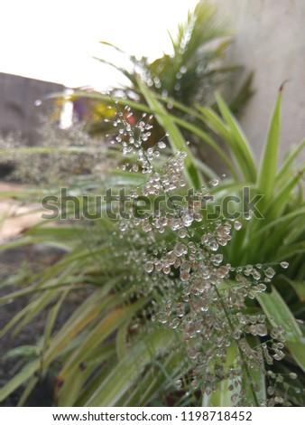 rain dew flower #1198718452