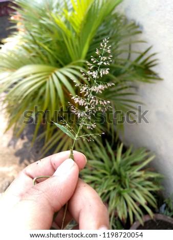 beautiful flower in hand #1198720054