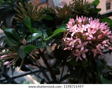 sunshine on pink flower #1198721497