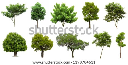 Collection Beautiful Trees Isolated on white background , Suitable for use in architectural design , Decoration work , Used with natural articles both on print and website. Royalty-Free Stock Photo #1198784611