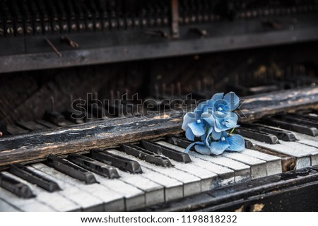 a blue flower on the piano keyboard