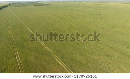 Green wheat in the field, top view with a drone. Texture of wheat green background #1198926181