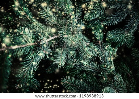 Christmas Background with falling white  snow and fir tree branches. Merry Christmas Festive Card. Copy space. #1198938913