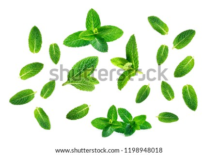 Fresh mint leaves pattern isolated on white background, top view. Close up of peppermint