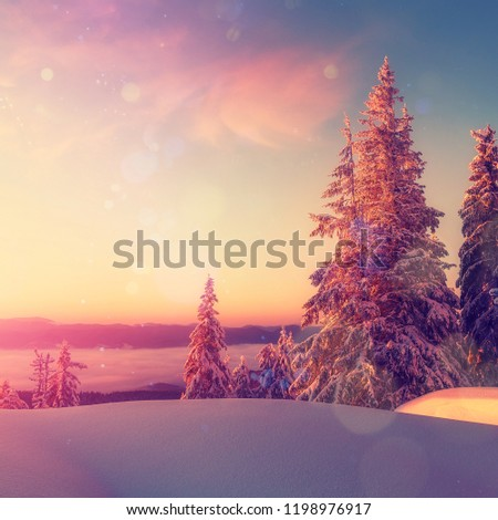 Amazing athmospheric Landscape. winter scenery at sunset. instagram filter. postcard. Snow covered tree under sunlight. Sunlight sparkling in the snow. instagram filter. winter nature background. #1198976917