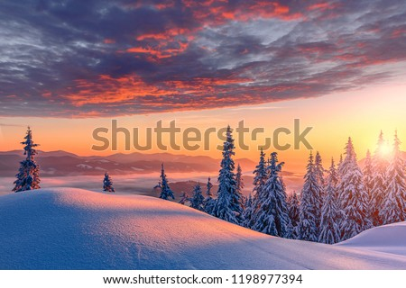 Fantastic winter landscape during sunset. colorful sky glowing by sunlight. Dramatic wintry scene. snow covered trees under warm sunlit. Sunlight sparkling in the snow. Splendid Alpine winter #1198977394